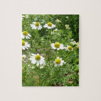 chamomile Flowers Puzzles