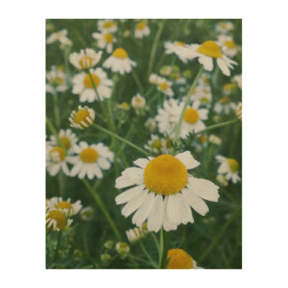 Chamomile in the Garden Wood Print