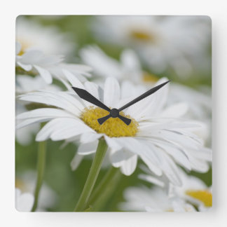 Chamomile Square Wall Clock