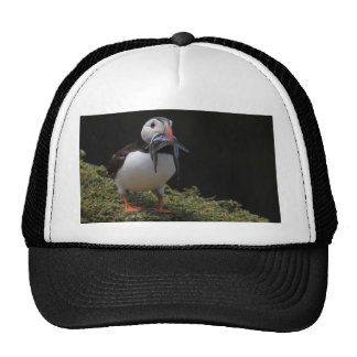 Champion Fisher Puffin Hat