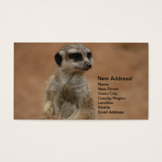 Change of Address Cards - Meerkats