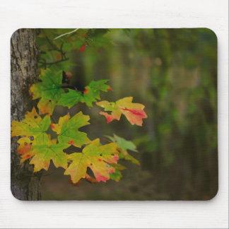 Change of Seasons Mouse Pad