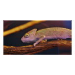 Changing Chameleon Personalized Photo Card