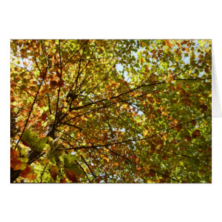 Changing Maple Tree Green and Gold Autumn Card