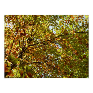 Changing Maple Tree Green and Gold Autumn Poster