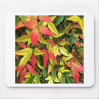 Changing Seasons Mouse Pad