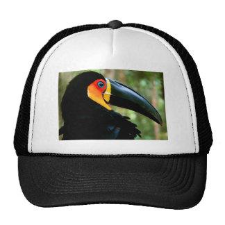 Channel-billed Toucan. Cap