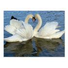 Chaperoned Swan Heart Love Postcard
