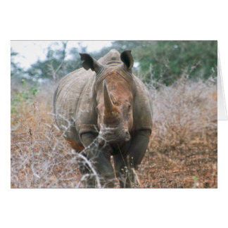 Charging Rhino Greetings Card