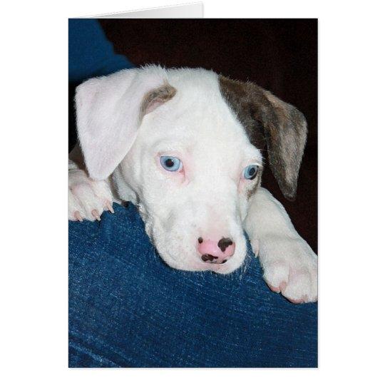Chari The Catahoula Puppy Card