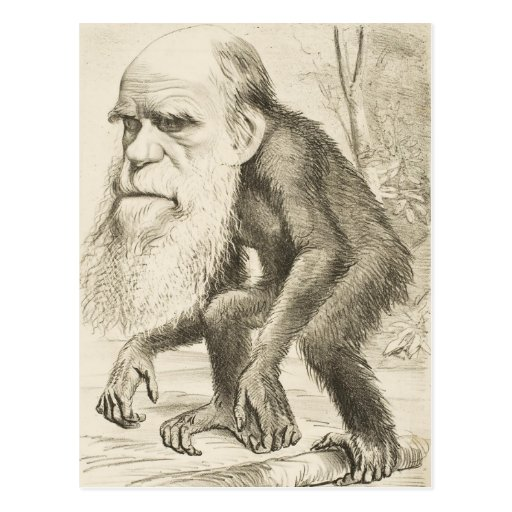 Charles Darwin Original Illustration Postcard