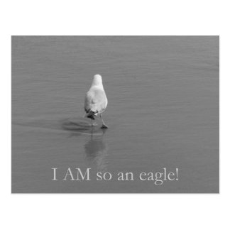 Charlie the lonely seagull - I am so an eagle! Post Cards