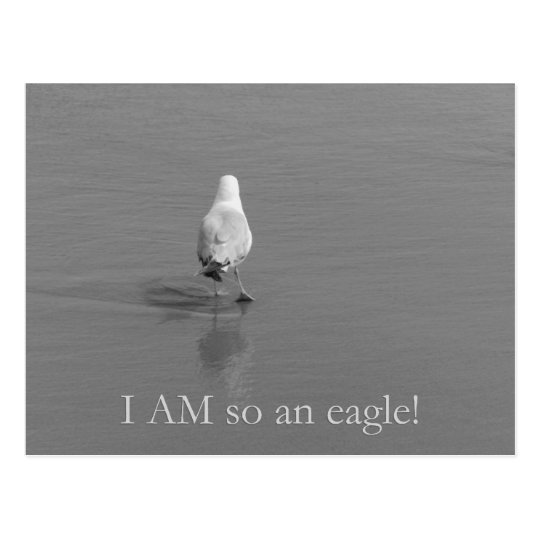Charlie the lonely seagull - I am so an eagle! Postcard