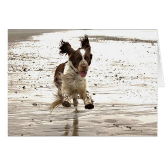Charlie The Springer! Greeting Card