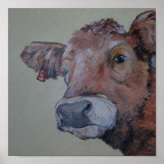 Charlois highlander cow takes a peek posters