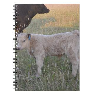 Charolais calf notebooks