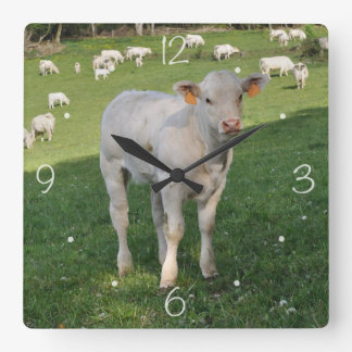 Charolais calf square wall clock