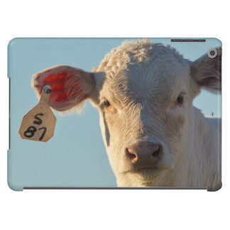 Charolaise Beef Calf Near Augusta, Montana, USA Case For iPad Air