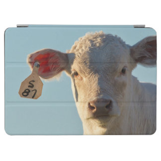 Charolaise Beef Calf Near Augusta, Montana, USA iPad Air Cover