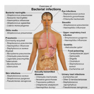 Chart of the Main Bacterial Infections in Humans