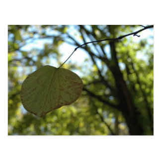 Chartreuse calm postcard