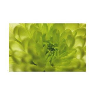 Chartreuse Green Mum Wrapped Canvas
