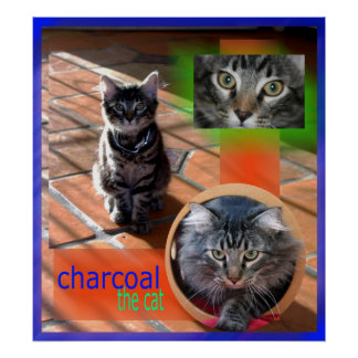 charxs poster