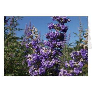 Chaste Tree Purple Flowers Greeting Card