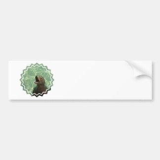 Chatty Sea Lion Bumper Sticker