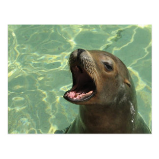 Chatty Sea Lion Postcard