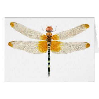 Checkered Setwing Dragonfly Watercolor Card