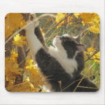 Checking out the fall colours mousepad