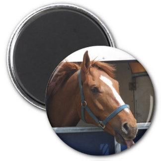 Cheeky Chestnut horse 6 Cm Round Magnet