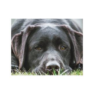 Cheeky Chocolate Labrador Canvas Print