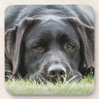 Cheeky Chocolate Labrador Coaster