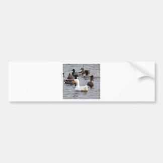 Cheeky Duck Bumper Sticker
