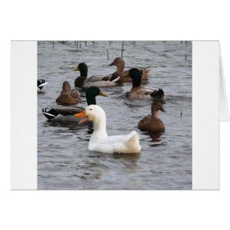 Cheeky Duck Card