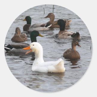 Cheeky Duck Classic Round Sticker
