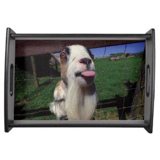 Cheeky Goat Tray