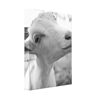 Cheeky Kid Canvas Print