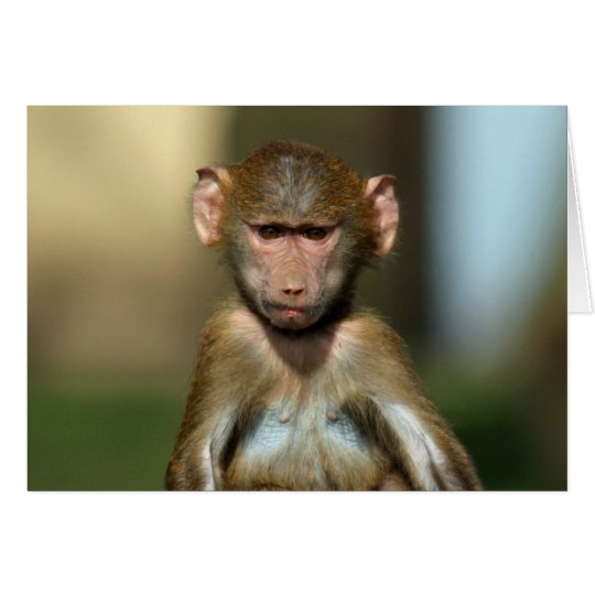 Cheeky Monkey - Cute Baby Baboon Card