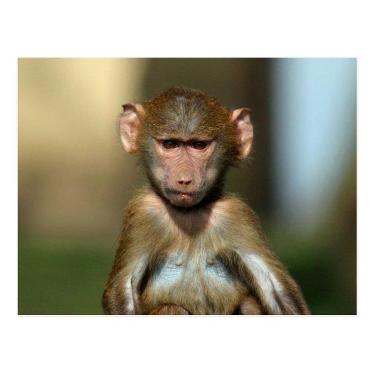 Cheeky Monkey - Cute Baby Baboon Postcards