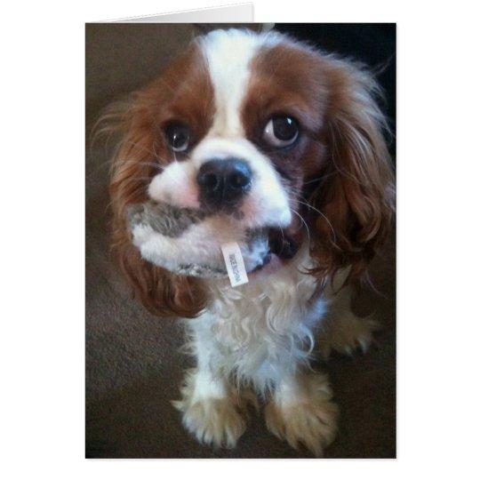 Cheeky Puppy Blenheim Cavalier Card
