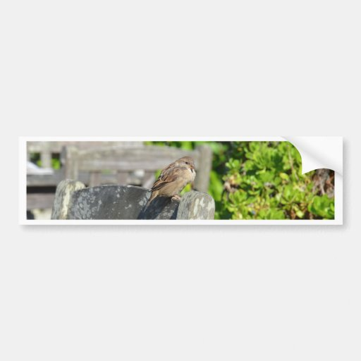 Cheeky Sparrow Bumper Sticker