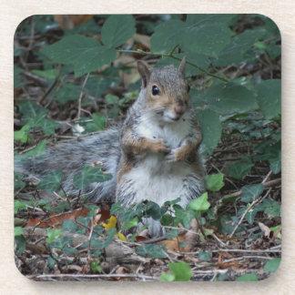 Cheeky Squirrel Coaster