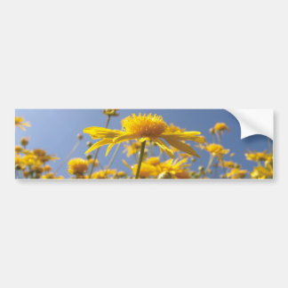 Cheerful Yellow Flowers Bumper Stickers