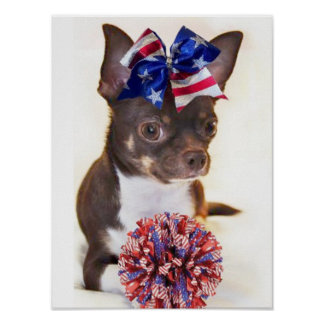Cheerleader Chihuahua dog Poster