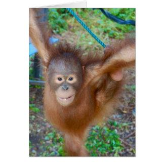 Cheerleader Team Orangutan Cards
