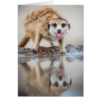 Cheers! Meerkat - Seasons Greetings Greeting Card