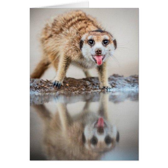 Cheers! Meerkat - Seasons Greetings Card